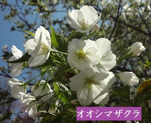 f:id:sumikichi52:20170413195754j:plain