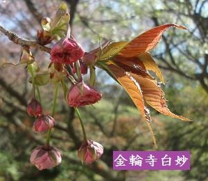 f:id:sumikichi52:20170413195755j:plain