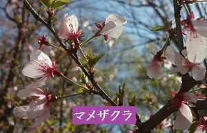 f:id:sumikichi52:20170413195756j:plain