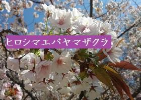 f:id:sumikichi52:20170413195757j:plain