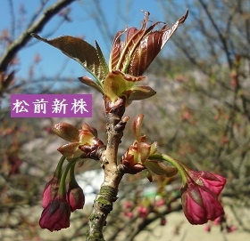 f:id:sumikichi52:20170413195801j:plain