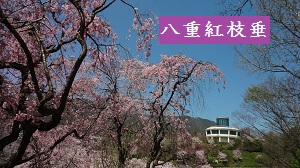 f:id:sumikichi52:20170413195802j:plain