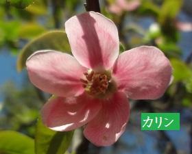 f:id:sumikichi52:20170413195803j:plain