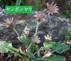 f:id:sumikichi52:20170413195805j:plain