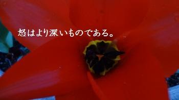 f:id:sumikichi52:20170414091515j:plain