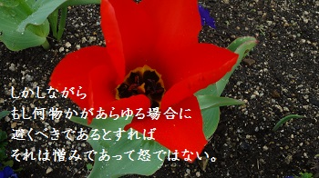 f:id:sumikichi52:20170414091518j:plain