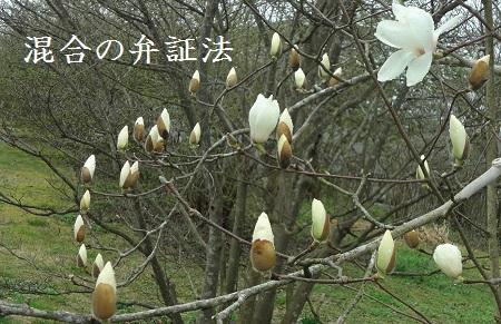 f:id:sumikichi52:20170419101859j:plain