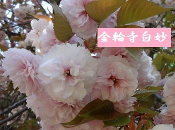f:id:sumikichi52:20170422192456j:plain