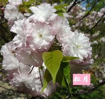f:id:sumikichi52:20170422192458j:plain