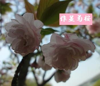 f:id:sumikichi52:20170422192459j:plain