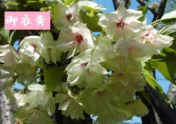 f:id:sumikichi52:20170422192503j:plain