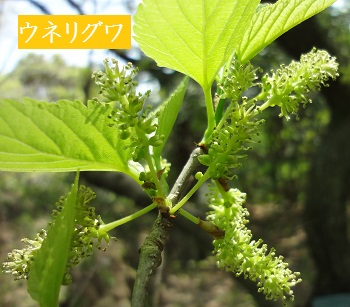 f:id:sumikichi52:20170422192507j:plain