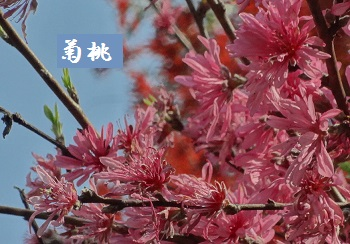f:id:sumikichi52:20170422192512j:plain