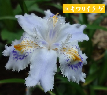 f:id:sumikichi52:20170422192514j:plain