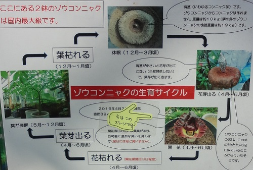 f:id:sumikichi52:20170422192516j:plain