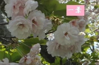 f:id:sumikichi52:20170422194345j:plain