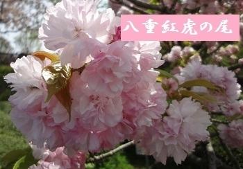 f:id:sumikichi52:20170422194447j:plain