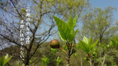 f:id:sumikichi52:20170427101150j:plain