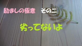 f:id:sumikichi52:20170520161900j:plain