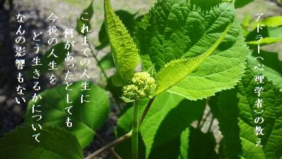 f:id:sumikichi52:20170602084307j:plain