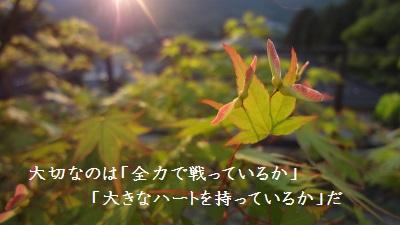 f:id:sumikichi52:20170602084310j:plain