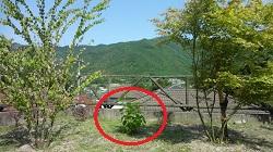 f:id:sumikichi52:20170603101214j:plain
