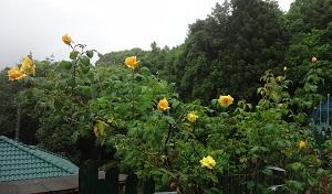 f:id:sumikichi52:20170608104718j:plain