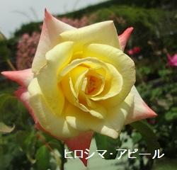 f:id:sumikichi52:20170612172413j:plain