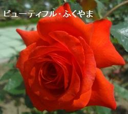 f:id:sumikichi52:20170612172415j:plain