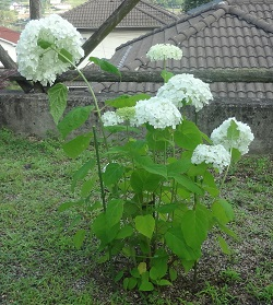 f:id:sumikichi52:20170623093309j:plain
