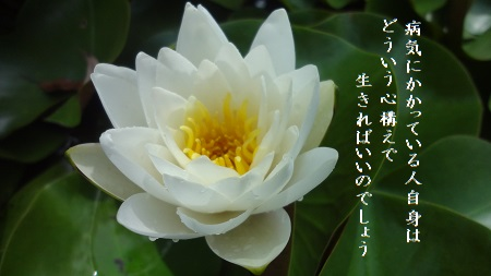 f:id:sumikichi52:20170624131437j:plain