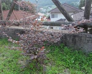 f:id:sumikichi52:20170702192758j:plain