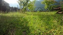 f:id:sumikichi52:20170818163521j:plain