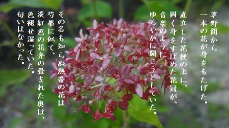 f:id:sumikichi52:20170823100056j:plain