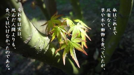 f:id:sumikichi52:20170823100059j:plain