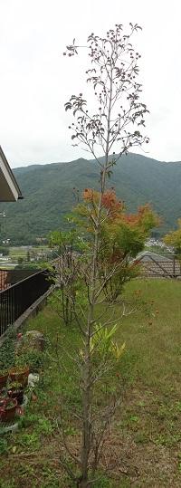 f:id:sumikichi52:20171018141432j:plain