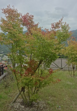 f:id:sumikichi52:20171018141436j:plain