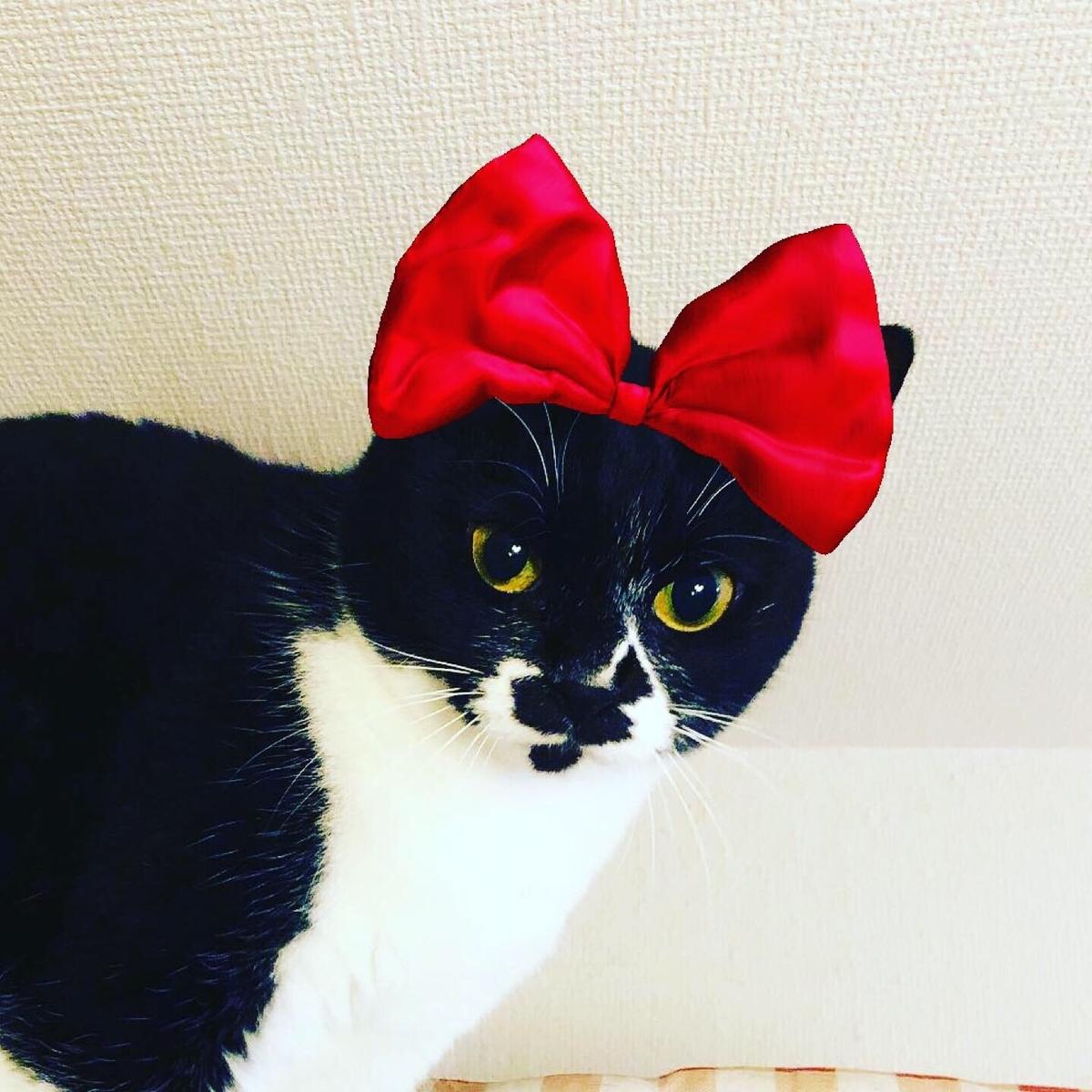 黒猫 赤いリボン