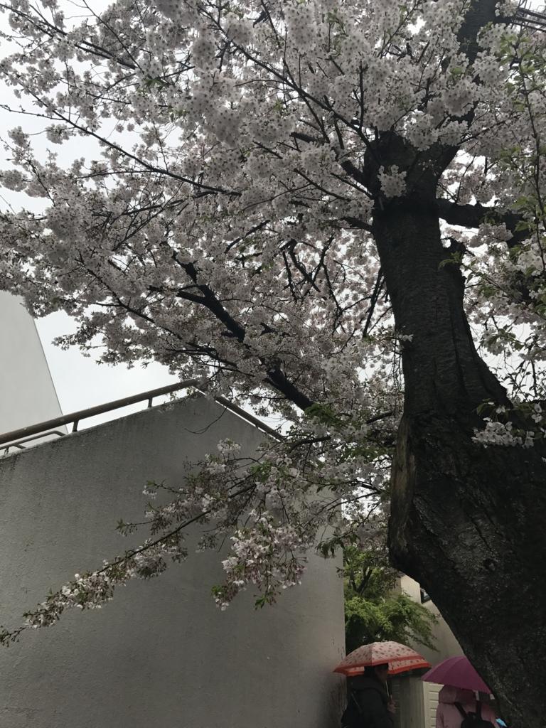 f:id:sumirenoniwaoyakai:20170411113116j:plain