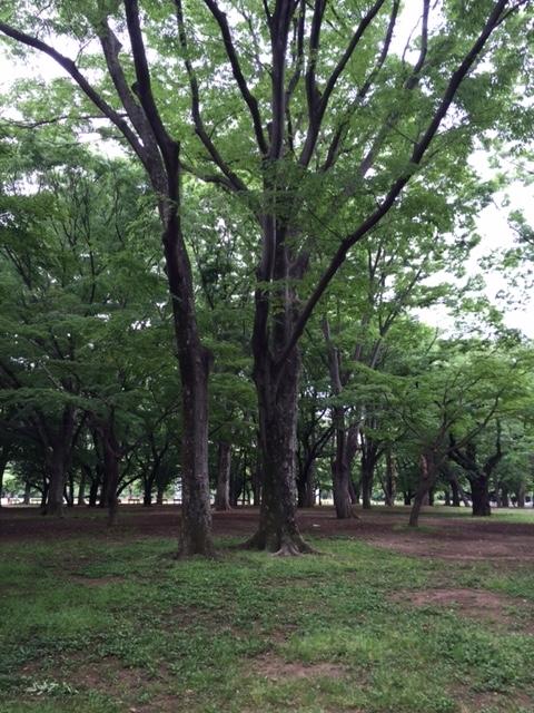 f:id:sumirenoniwaoyakai:20170603211236j:plain