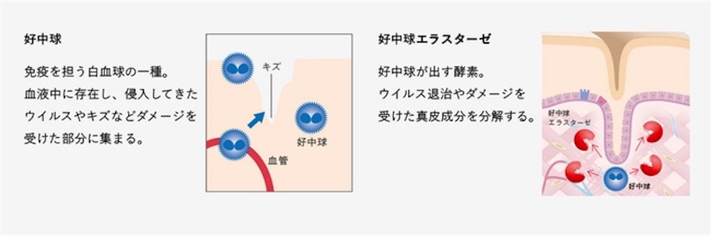 f:id:sumokun:20200221231146j:image