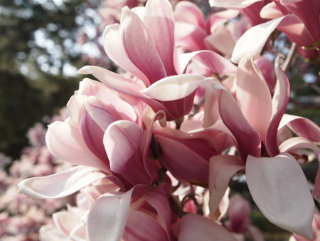 f:id:sumomoiro:20110403150624j:image