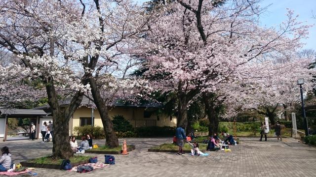 f:id:sumomomomoko:20160401152618j:plain