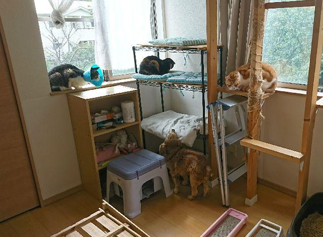f:id:sumomomomoko:20161011172700j:plain