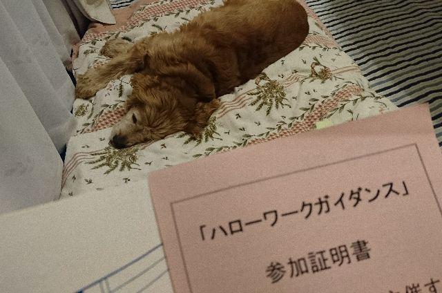 f:id:sumomomomoko:20161018173656j:plain