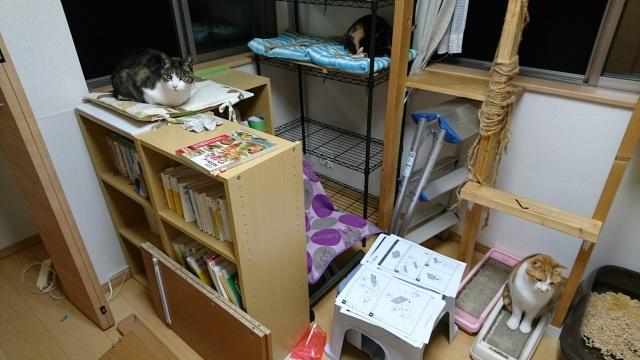 f:id:sumomomomoko:20161125171210j:plain
