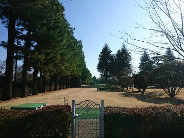 f:id:sumomomomoko:20170109164126j:plain