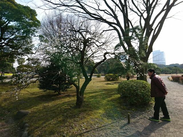f:id:sumomomomoko:20170206230553j:plain