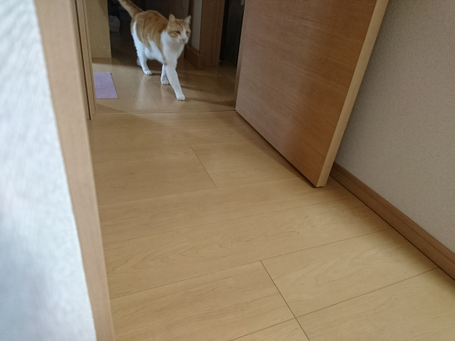f:id:sumomomomoko:20170409225219j:plain