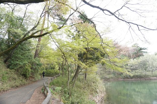 f:id:sumomomomoko:20170418140712j:plain